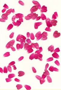 Rose_Petals_II_by_Halo_Junky
